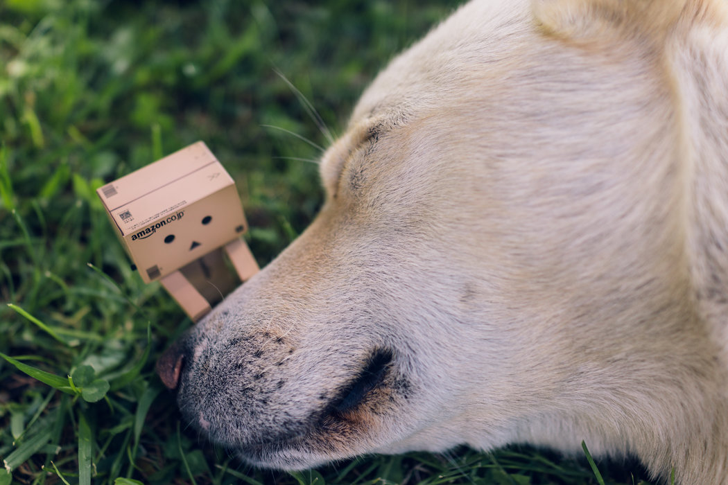 Wake up... It's Monday already! köpek danbo dog